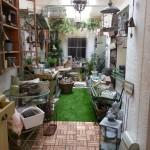 Lovely Home and Garden - Garden